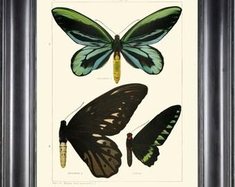 BUTTERFLY PRINT SEITZ  Botanical Art Print 20 Beautiful  Blue Green Butterflies Alexandrae Trojanus