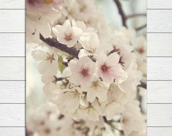 Divinity  - Photographic print - Pink, Cherry Blossom, Spring, Festival, Washington, D.C., Romantic, Floral, Shabby, Cottage, Chic