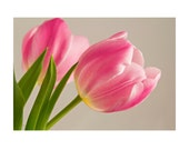 5x7 Special Occasion Greeting Cards--Set of Three--Two Pink Tulips