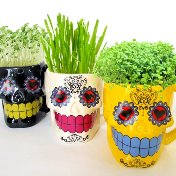 DIY Microgreens in Sugar Skull Mugs Planter Seeds Kit Day
