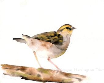 Bird Art - 13x19 or 16x20 LARGE print - Grassland Sparrow - Nature Watercolor - Sparrow Painting - Childrens Art - Watercolor Bird Painting