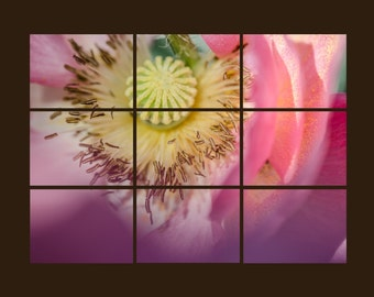 Pink Poppy Mosaic. Flower. Nature. Macro Photography. Set of nine 4x6 Prints by OneFrameStories.