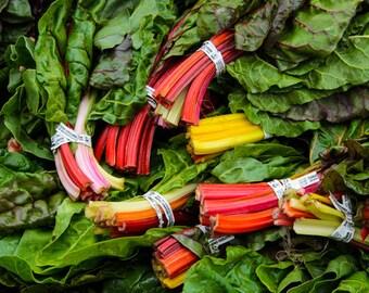 Food Photography - Rainbow Chard -  Farmers Market - San Francisco, CA - 8x10 Fine Art Photograph - Kitchen Wall Art