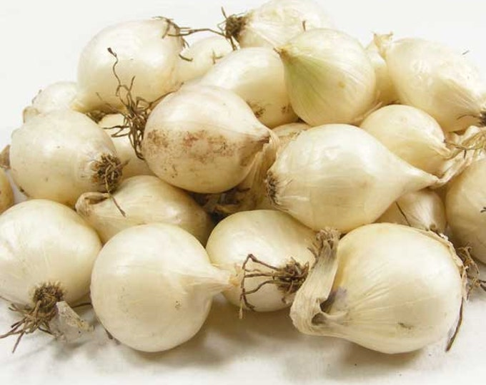 White Onion Sets Organic | White Ebenezer Onion Bulbs Shipping Now 8 oz.