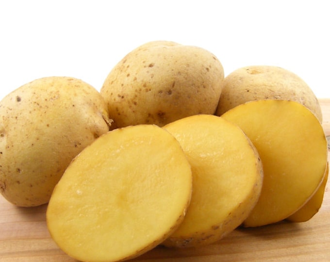 Yellow Finn Seed Potatoes Certified Organic and Virus Free 2 Lbs. Yellow Seed Potatoes - Spring Shipping Non-GMO