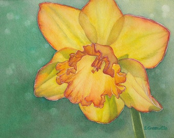 8x10 inch Daffodil - print of watercolor painting