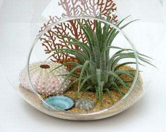 Hanging Terrarium Kit, REEF, Air Plant in Glass Globe, Tropical Beach Terrarium with Pink Urchin, Beach Decor, Gift Under 30