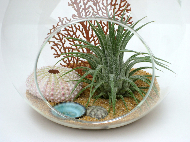 hanging terrarium kit reef air plant in glass globe