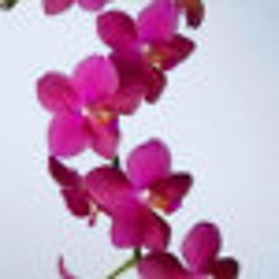 orchidladycats