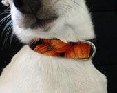 Pumpkin Patch Fall Harvest KOUTURE Adjustable Dog Collar-Ready To Ship