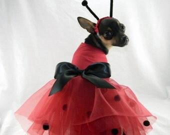 Lady Bug dog costume with headband XXS-M