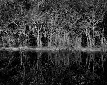 Ghosts- Black and White Fine Art Landscape Print of Reflections in the Everglades