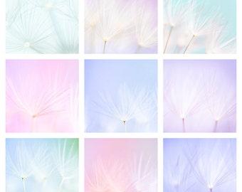 Nursery Art Print - Nature Photography - Dandelion Art Print - Baby Pink, Blue - Dandelion PhotoBaby Art