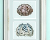 Sea urchin print on 2 Panels, Nautical print beach house decor wall art wall decor art print Nautical Decor bathroom  sea anemone picture