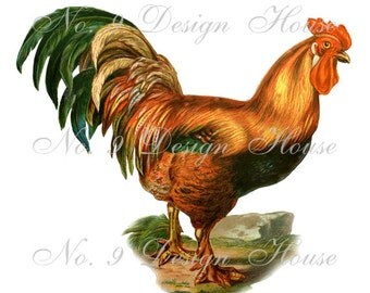 Digital Download Rooster, Digital Vintage Rooster, ACEO, Vintage Digital, Digital Collage, Large Image,Transfer Images, Printable