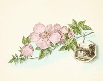 DOGWOOD Blossoms Sprig Branch - SPRING - Instant Download Vintage Image