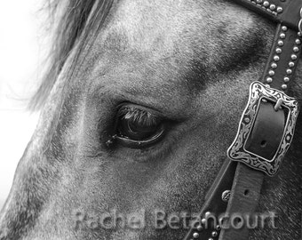 Racehorse, close up