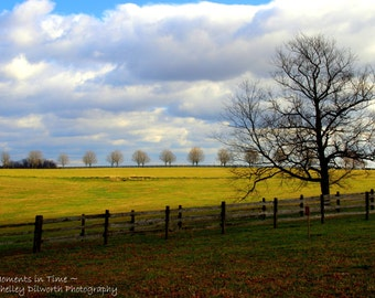 Landscape Photography, Trees by the Fence, Travel Photography, Fine Art Travel Photography, Art, Home Decor, Wall Art, Fine Art Photography