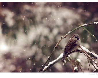 Winter bird wildlife photograph, fine art photo print, landscape, nature, birds, trees, wildlife, winter, rural england, uk