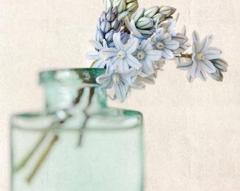 Flower Photography, Still Life Art, Flower Art Print, Floral Photography Print, Baby Blue, Aqua Green, Wall Art