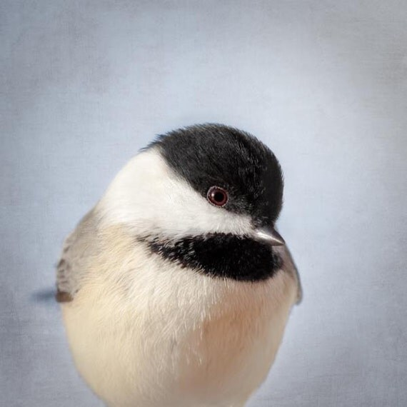 Bird Art, Chickadee Print, Animal Art Print, Bird Photography Print, Woodland Critter Bird Photo, Fine Art Photograph, Chickadee No. 14