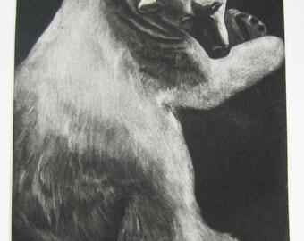 Polar Bear , Mezzotint