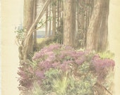 Bird Print - Quail - Vintage Bird Book Plate Print - Heather Grass - Country Diary of Edwardian Lady - Edith Holden - 1906