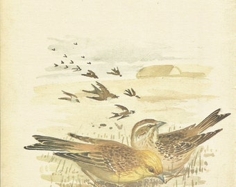 Bird Print - Yellow Hammer Finch - Vintage Bird Book Plate Print - Country Diary of Edwardian Lady - Edith Holden - 1906