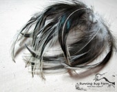 """Real Bird Feathers Natural Loose Hackle Feathers Black & White Silver Laced Cochin Rooster Chicken Feathers For Crafts 15 @ 5 - 5.5"""" / SLC9"""