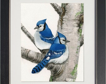 Blue Jays in Birch Tree - archival watercolor print by Tracy Lizotte
