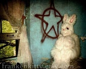Surreal Creepy White Rabbit Photography Print, Variations on Claustrophobia