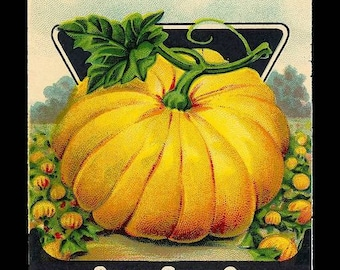 Instant Download Halloween Thanksgiving Pumpkin Seed Packet Post Card You Print Digital Image Orange Yellow Black 4x6 image