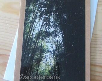 Tall Trees III Blank Greeting Card Photography