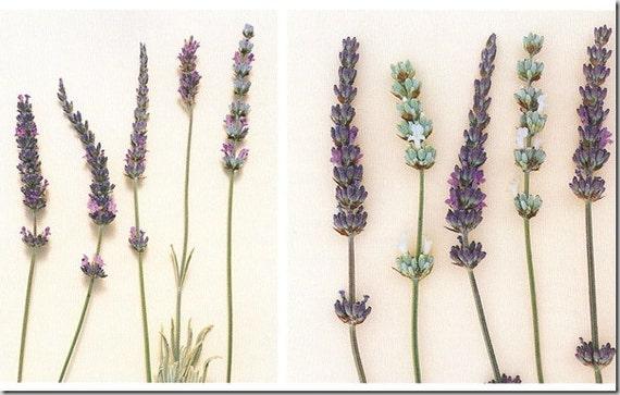 custom order lavender pillow for Debbie