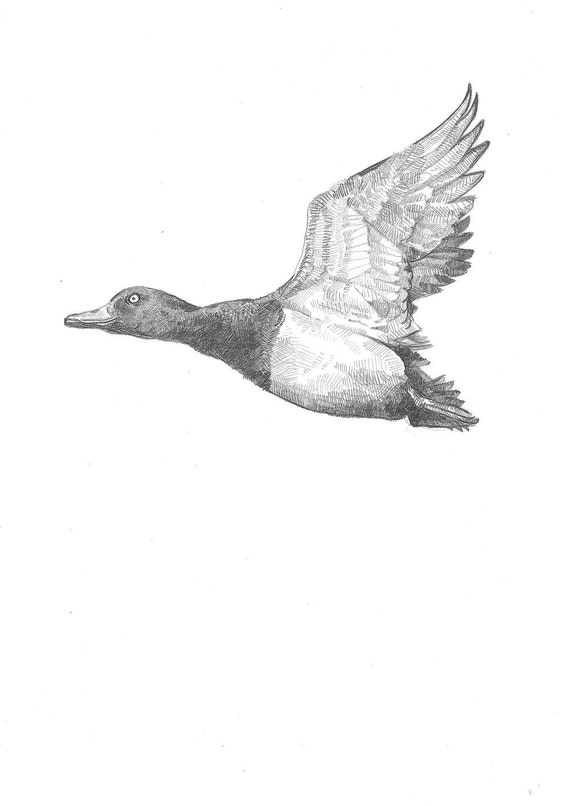 Items similar to A5 Print - Flying Duck - Pencil Drawing ...