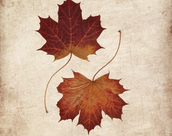 Maple leaves photo print, yin yang, zen art, seasonal art print, rustic autumn decor, fall picture, foliage