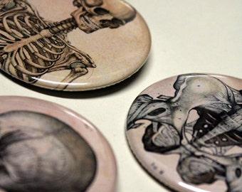 "Skeleton, Pelvis, Skull - Pinback | Button 2.25"" Inch - Halloween"