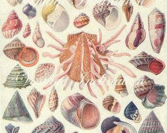 Antique Print, 1920 SHELLS Chart 1179 1180 beautiful wall art vintage color lithographs illustration shells ocean sea