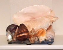 Sea shell Lamp Vintage Shell Grotto tv lamp Shell Souvenir  lighting works kitsch nautical art beach desk office kitchen FREE USA SHIPPING