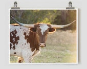 Longhorn Texas Hill Country Fine Art Photography