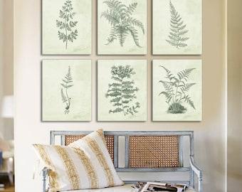 Fern Print, Fern Botanical Prints, Botanical, Set of 6, Fern Prints, Rustic, Botanical Fern, Traditional Home Decor, Living Room Art, Ferns