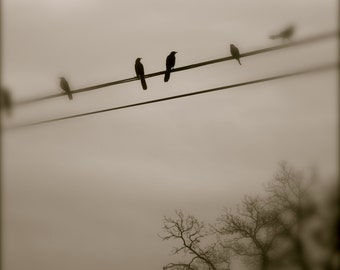 Bird Photography, Black Bird, Austin, Texas, Black and White, Grey, Dreamy, Surreal, fPOE, Dream Bird Pair