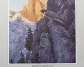 Return of The Falcon Stephen Lyman Yosemite Poster