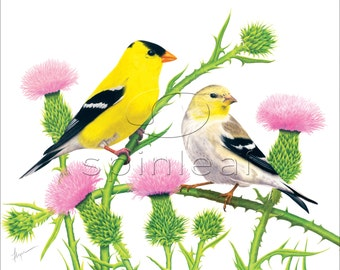 Gold Finches Bird Art print -- Illustration of 2 Yellow Finches