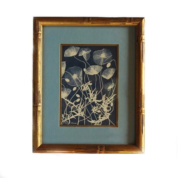 Vintage Framed Print Of Anna Atkins Cyanotype By