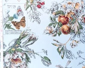 Vintage Etched Art Fruit & Nature - Garden, Nature, Script Notes, Pale Blue Background, Painted Look - Wallpaper By The Yard - FNH27-5