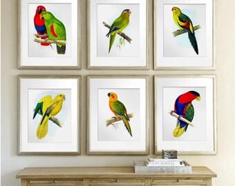 Vintage Bird Prints, Tropical Birds Decor, Parrots Bird Wall Art set of 6 Parrots Red Yellow Summer Wall Art, Parrots Posters