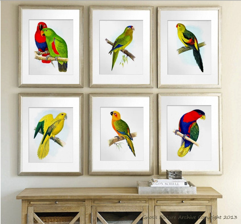 Birds Wall Art antique bird prints tropical art decor antique bird wall art