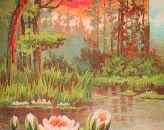 Antique SCENIC  WATERLILY Pond Sunset #3 Postcard -  INSTANT Digital download - trees birds marsh