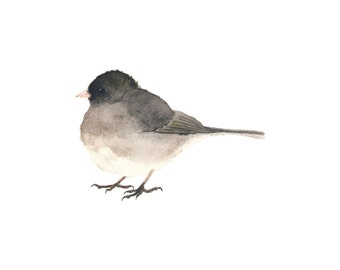 Black and Gray Junco Watercolor Bird - Fine Art Print